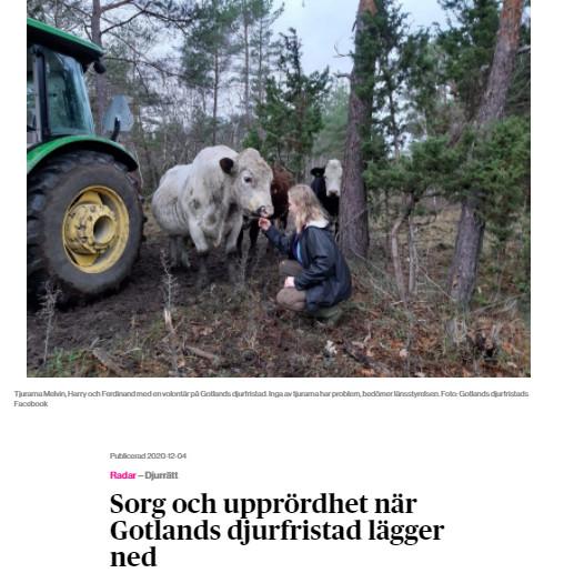 Skärmdump av artikel om att Gotlands djurfristad lägger ned.